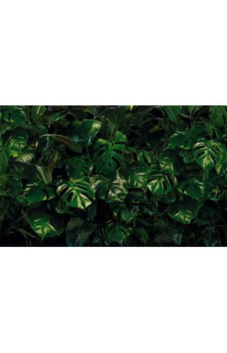Papier Peint Jungle Et Tropical Avec Feuilles De Palm
