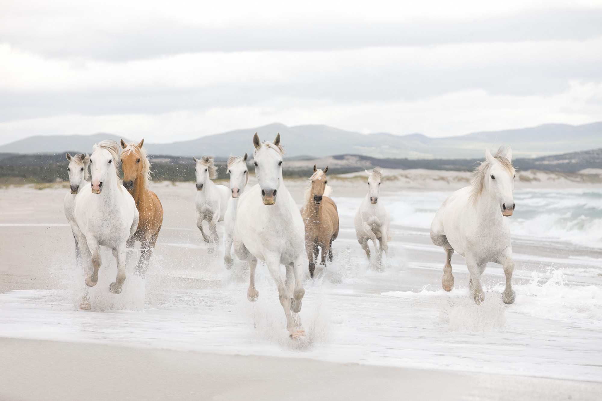 White Horses - Papier peint XXL Komar