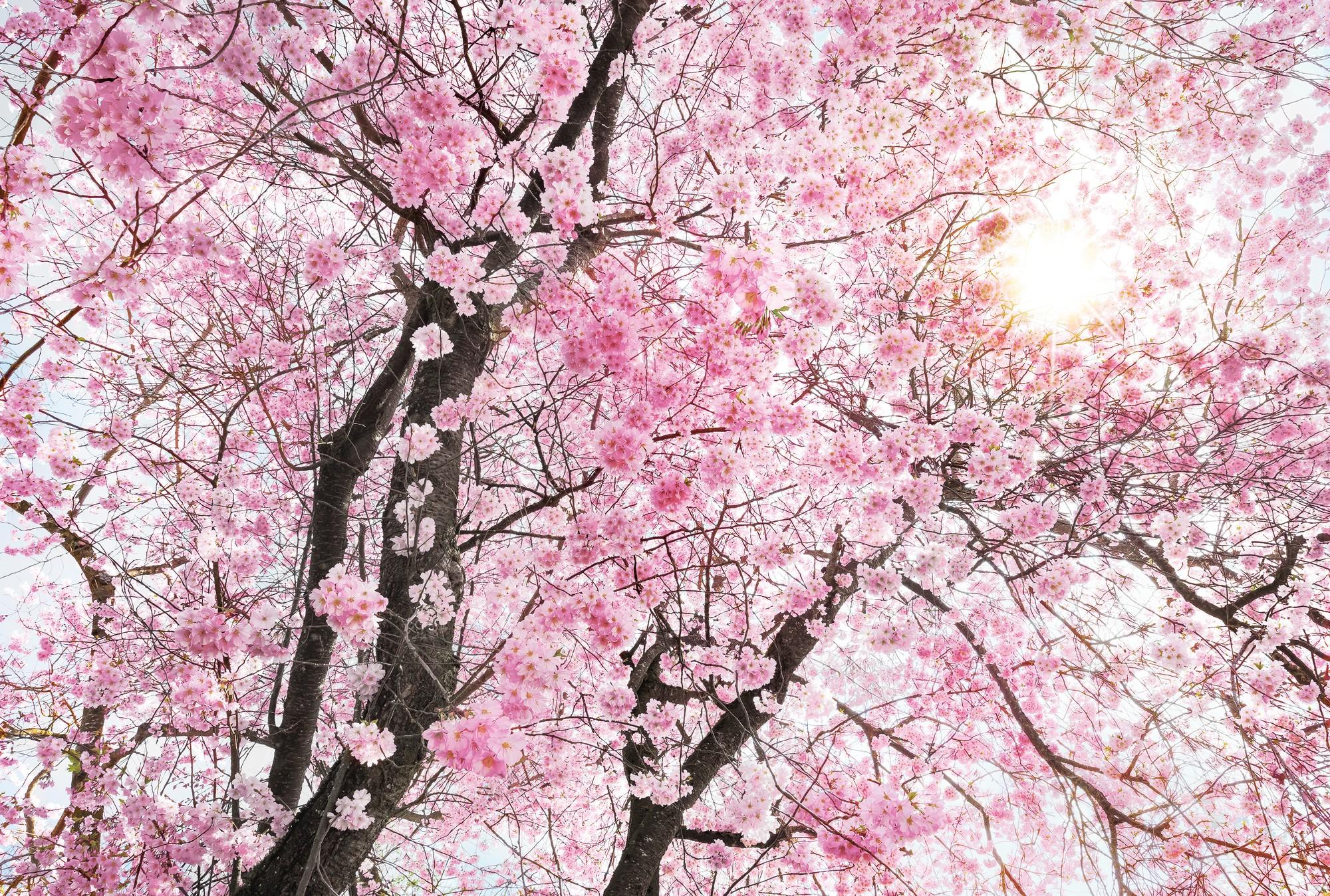 Bloom - papier peint intissé