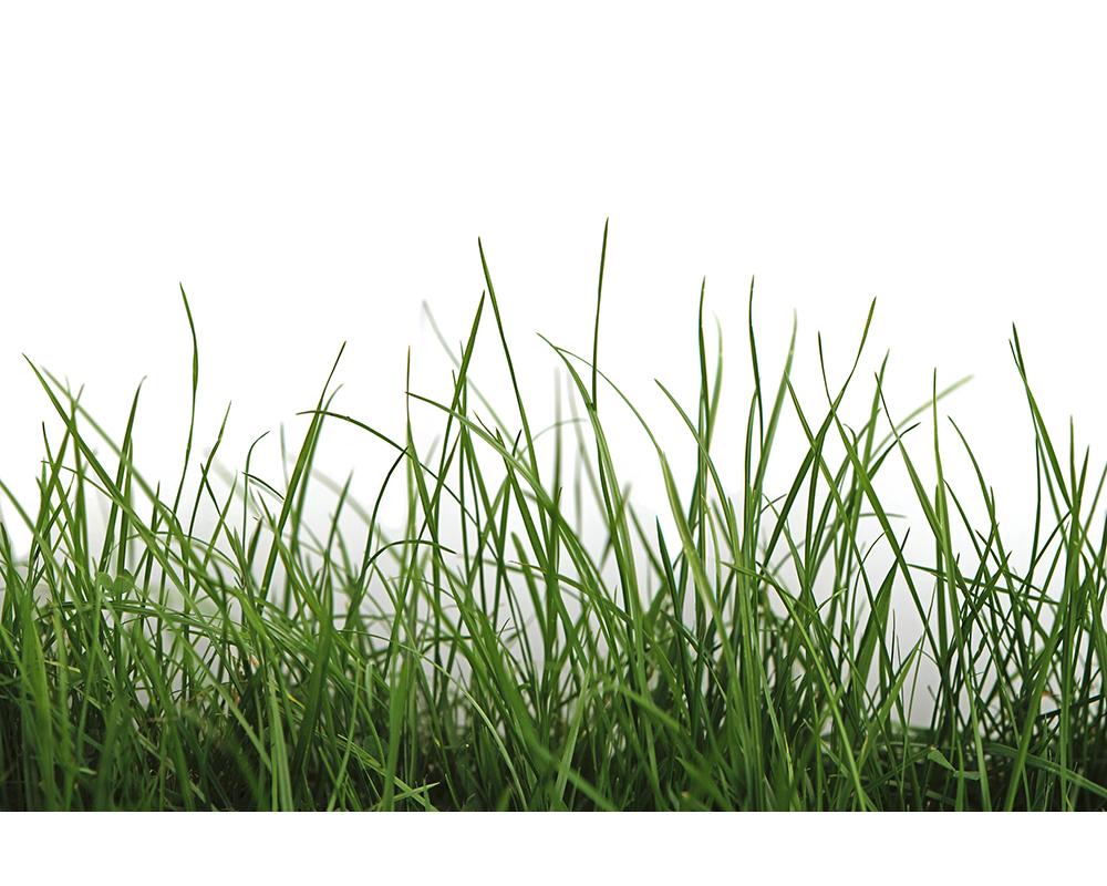 Green Grass Detail