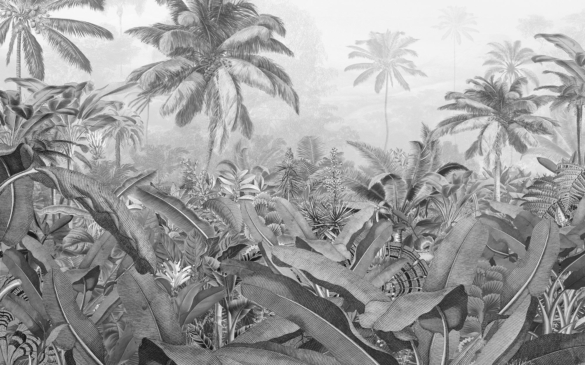 Papier Peint Panoramique Noir Et Blanc papier peint panoramique amazonia black and white - papier