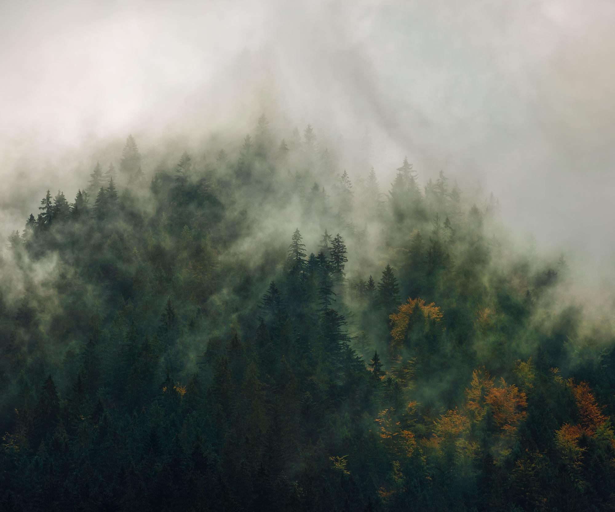 Panoramique Tales of the Carpathians - Papier peint Komar
