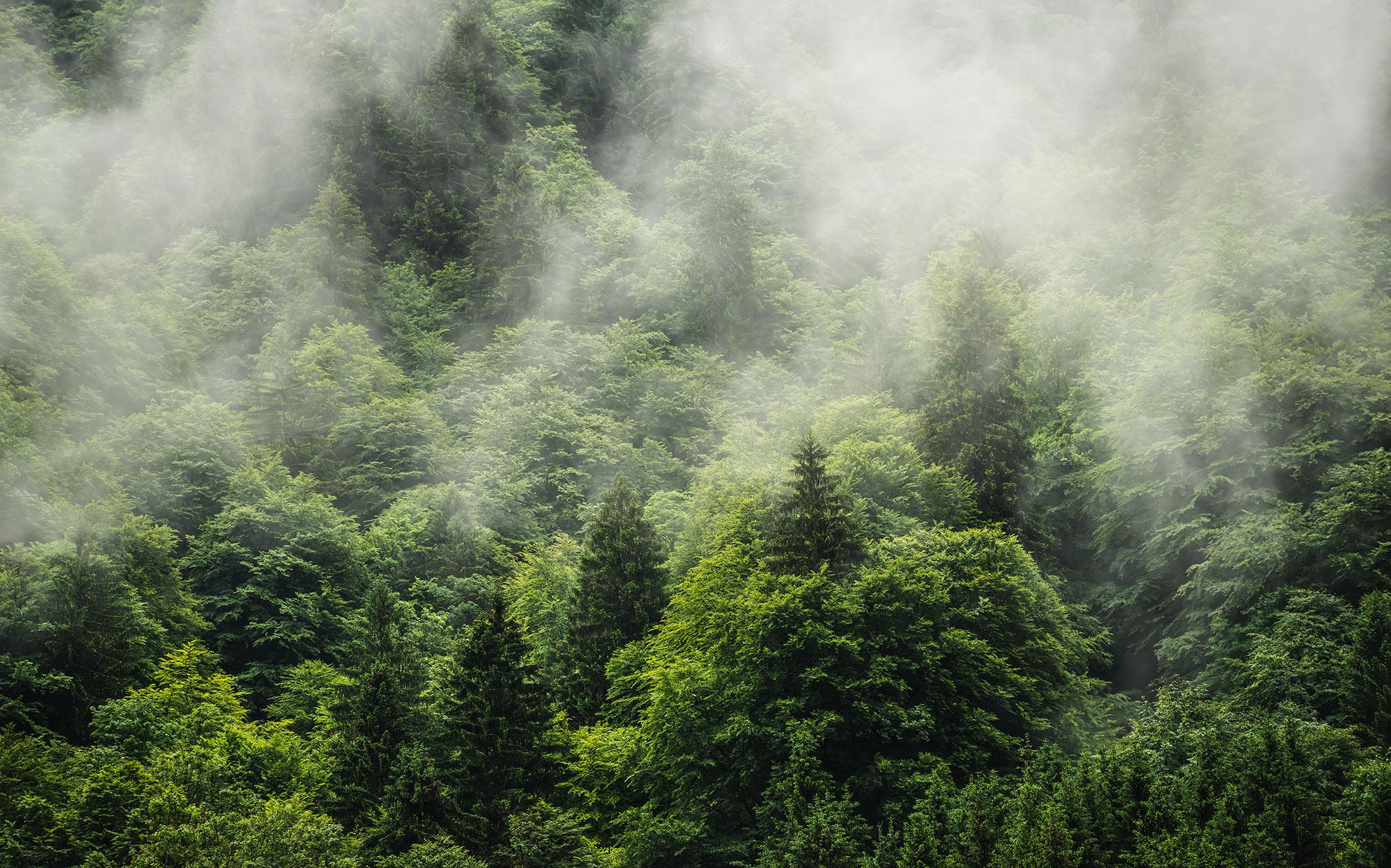 Panoramique Forest Land - Papier peint Komar