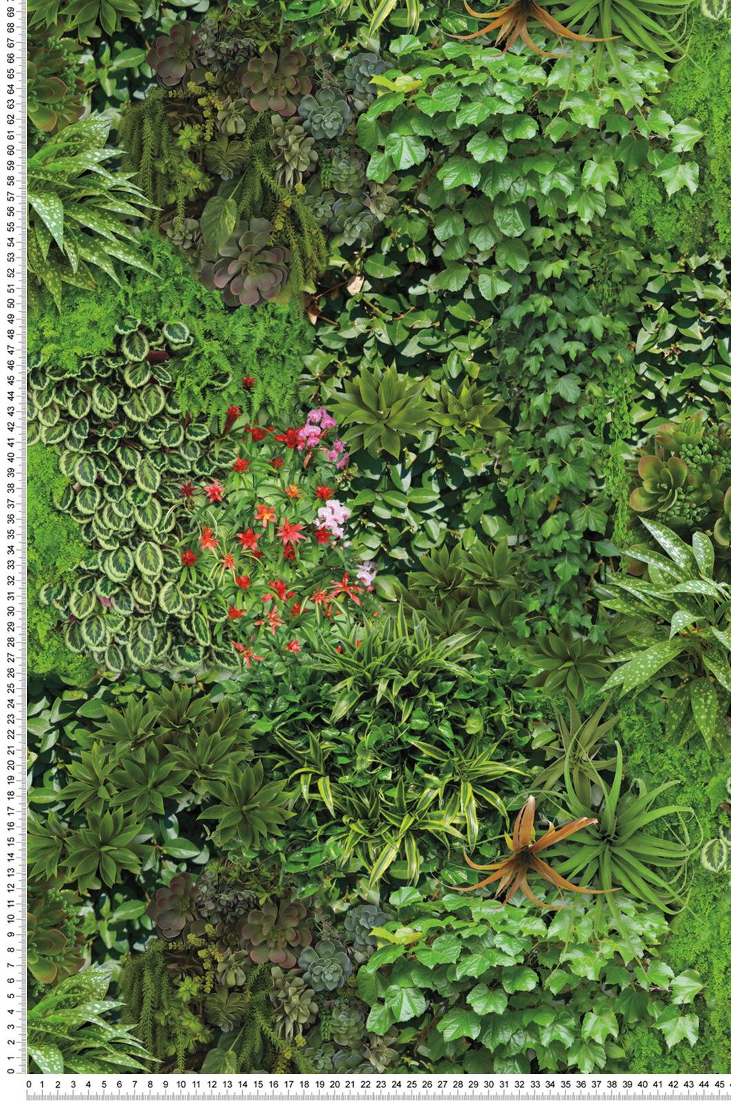 Mur Vegetal Plante Grasse papier peint mur végétal - outdoors in d'initiales