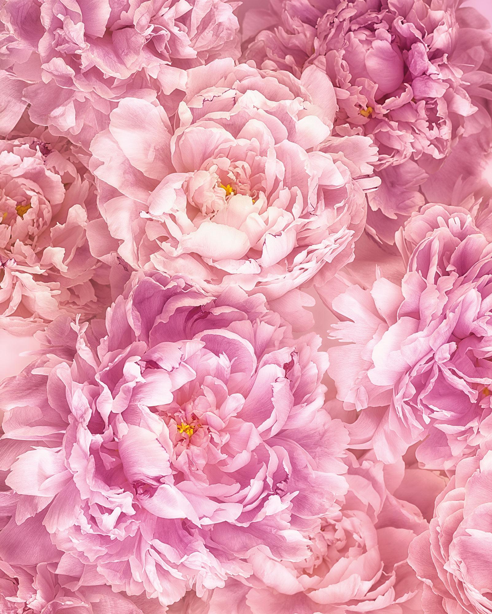 Papier peint panoramique fleurs Soave - Papier peint Komar